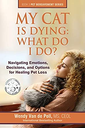 My Cat Is Dying: What Do I Do?