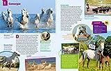 WAS IST WAS Pferde und Ponys: Reiten, Fohlen, Pferdesprache, Turniere, Zucht und Pflegepferd! (WAS IST WAS Edition) - 11