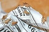 ヨーロッパイエコオロギ(Sサイズ)100匹セット・東京プロスパーインターナショナルがお送りさせて頂きます。