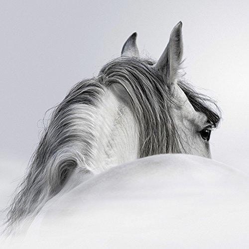 Paardenfoto Print Schilderij Plexiglas Canvas Grootte Grote 60cm X 60cm Klaar om op te hangen