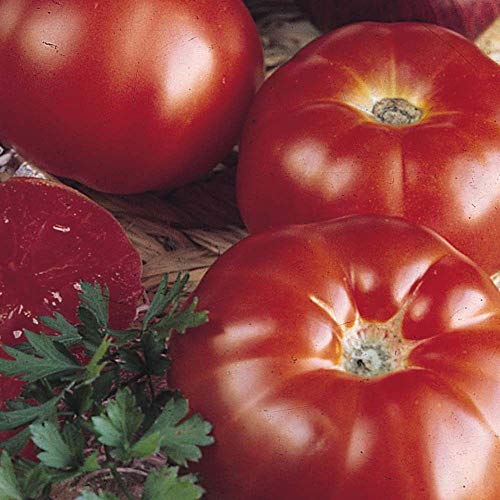 Portal Cool Super Tomate Raf Marmande -600 Samen Samen