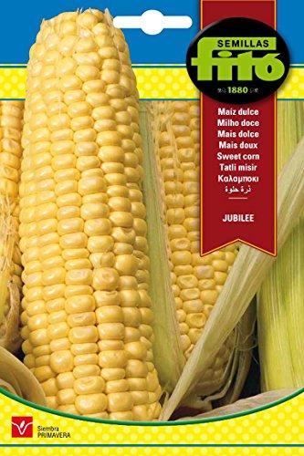Semillas Fitó 3131 - Semillas de Maíz Dulce Jubilee