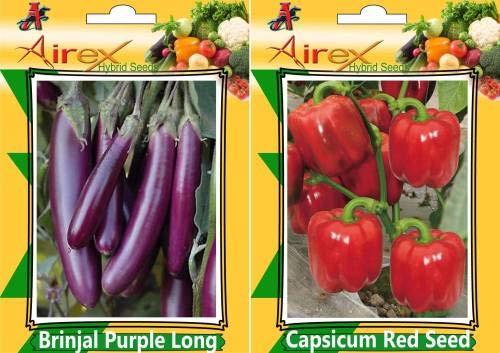 GEOPONICS SEED Brinjal lungo viola e Seed Capsicum Red (confezione da 20 semi di melanzana lunga viola + 20 Seed Capsicum Red) Seed Seed (40 per pacchetto)
