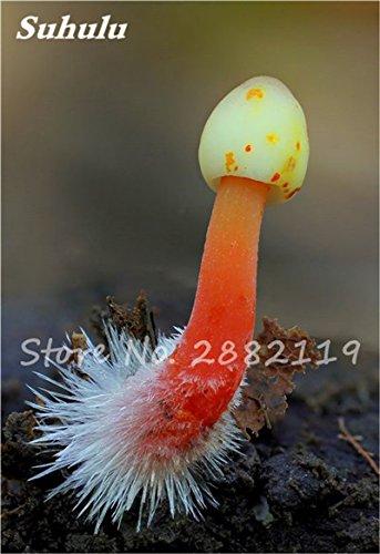 Nouveaux 80 Pcs champignons rares Graines Succulent Plant, Godsend cadeaux, Ornement Pot, jardin Fournitures de bonsaïs d'intérieur pour Happy Farm 10