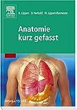 Anatomie kurz gefasst - Herbert Lippert