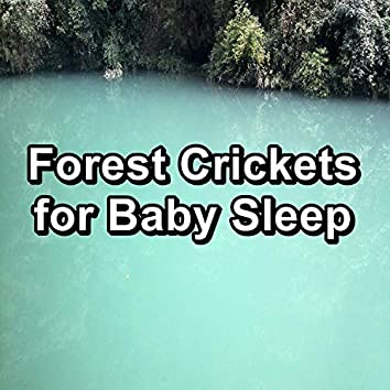 Forest Crickets for Baby Sleep