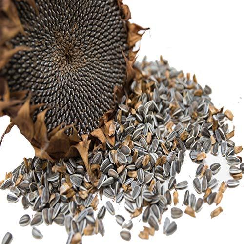 Vogelfood gestreifte Sonnenblumenkerne Marke 25 kg