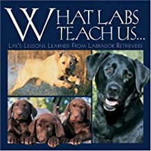 What Labs Teach Us: Life's Lessons Learned from Labrador Retrievers