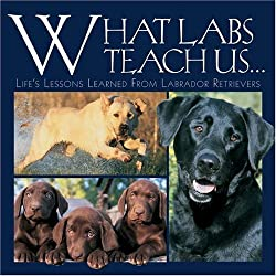 labrador retriever dog breed book