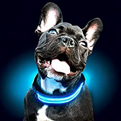Dog wearing a blue Ultimate LED dog collar by Shine For Dogs.