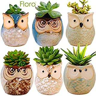 Floro Owl Planter Pots, Around 2.4x2.6 Inches, Flower or Bonsai Plant Ceramic Pots for Indoor or Outdoor, Gorgeous Owl Design, Includes Drainage Hole, Ideal as Succulent Plant Pots, 6 Pack
