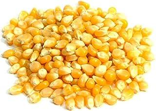 500g ポップコーン トウモロコシ 種 popcorn ポップ コーン