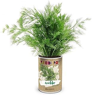 Amazon.es: Seed Box by EcoHortum - Kits de cultivo en casa ...