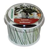 Salbei - Vaso para hierbas aromáticas