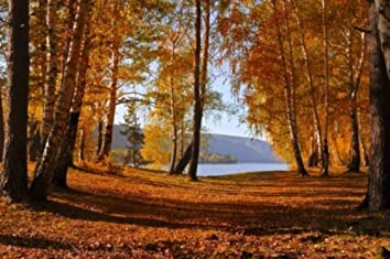 Shostakovich: Concerto for Violin No. 1 and Concerto for Violin No. 2