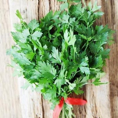 1/0,9 kilogram (Petroselinum Blanc) Graines géant Persil Microgreens ou jardin Graines