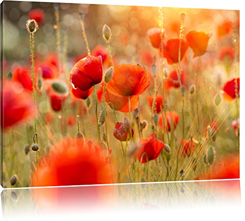 Mohnwiese Bild auf Leinwand, XXL riesige Bilder fertig gerahmt mit Keilrahmen, Kunstdruck auf Wandbild mit Rahmen, guenstiger als Gemaelde oder Bild, kein Poster oder Plakat, Format:100x70 cm