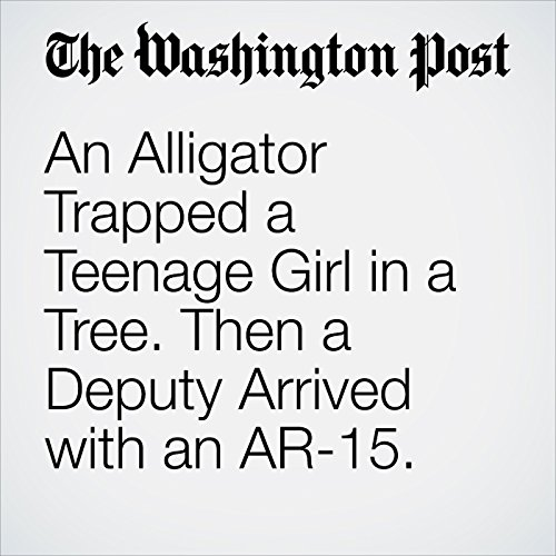 An Alligator Trapped a Teenage Girl in a Tree. Then a Deputy Arrived with an AR-15. copertina