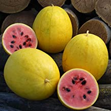 20 Seeds of Golden Midget Watermelon / Citrullus lanatus