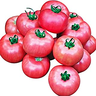Organic Bradley Tomato Seeds - Great for Canning and Freezing as All Ripen at The Same Time - Neonicotinoid-Free.
