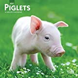 Piglets 2021 7 x 7 Inch Monthly Mini Wall Calendar, Domestic Pet Baby Farm Animals
