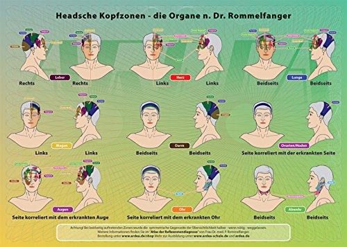 4-Elementeverlag Poster der Reflexzonen: die Headschen Kopf-Zonen •die Organe