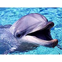 DIYダイヤモンドラインストーン塗装キット イルカの動物 ラウンドフルダイヤモンド刺繍アート絵画の壁の装飾-(16x20インチ)