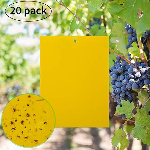 KINBOM Paquet de 20 pièges à Mouches Collants Jaunes Double Face pour Insectes végétaux tels Que moucherons fongiques, pucerons Volants, Autres Insectes Volants (6 x 8 Pouces, Liens torsadés Inclus)