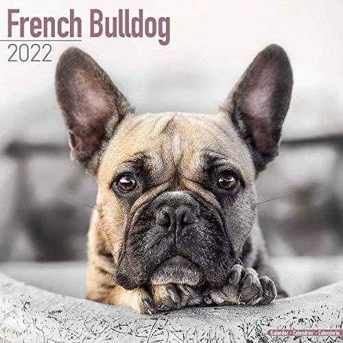 French Bulldog Calendar - Dog Breed Calendars - 2021 - 2022 wall calendars - 16 Month by Avonside