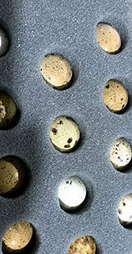 12 Fertile Coturnix Quail Hatching Eggs by Undique Farm