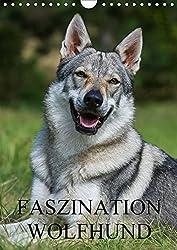 wolfshund wolfshybrid wolfshund hunderassen. Black Bedroom Furniture Sets. Home Design Ideas