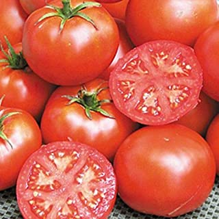 Best john baer tomato seeds Reviews