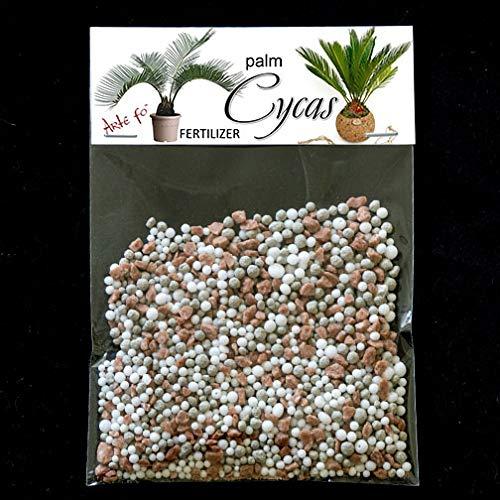 dgdfg Engrais Cycas Palme, Palm, Cycas Revoluta, Todda-pana assez pour 20 litres