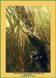 World of Art Arthur Rackham Seize The Despoiler. Rescue die