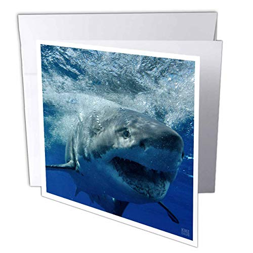 3dRose Great White Shark - Greeting Cards, 6 x 6 inches, set of 6 (gc_10587_1)