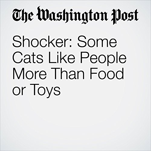 Shocker: Some Cats Like People More Than Food or Toys copertina