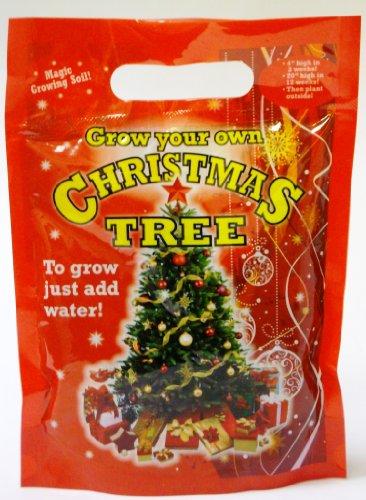 Développez votre propre vrai Noël avec des graines et du sol juste ajouter de l'eau