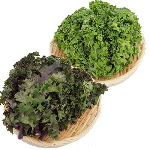 カーリーケール(緑または紫) 無農薬栽培 120g 4袋
