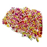 Pequeña cabeza de flor seca natural Inicio Boda Guirnalda Decoraciones para álbumes de recortes Flores multicolores Daizy para cubierta de vidrio Relleno de arte de uñas Epoxi Manualidades DIY