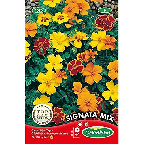 Germisem Signata Mixed Semi di Tagetes 0.5 g