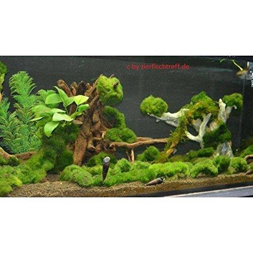 Unterwasserrasen, Unterwassergras, Algenkiller, Sauerstoffproduzent und Teichpflanze in einem