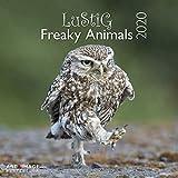 Lustig - Freaky Animals 2020 A&I - Broschürenkalender - 30x30cm - Wandkalender