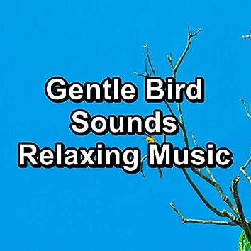 Gentle Bird Sounds Relaxing Music