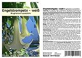 Seedeo Engelstrompete weiß-hängend - Brugmansia suaveolens 10 Samen