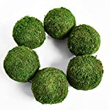 "Vumdua Moss Ball, Natural Decorative Green Globes with Handmade, Hanging Balls Vase Bowl Filler for Home Party &Weddings Display Decor Props (3.5""-Set of 6)"