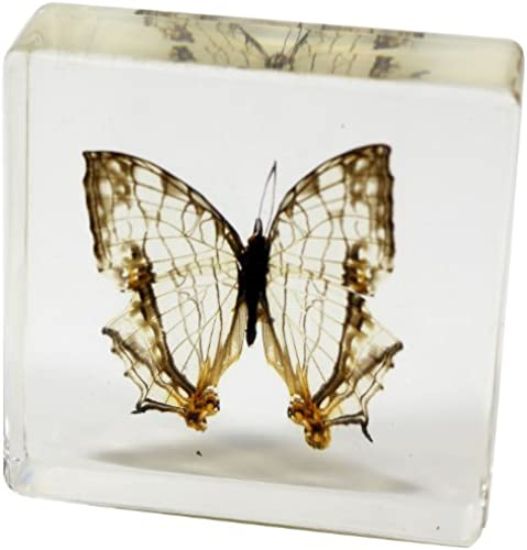 popular Common Mapwing Butterfly Paperweight(3x3x1) Paperweight(3x3x1) Paperweight(3x3x1) by REALBUG  marca