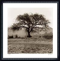 ポスター アラン ブラウステイン Willow Tree 額装品 ウッドハイグレードフレーム(ネイビー)