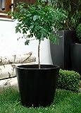 Zink Blumenkübel Übertöpfe Pflanzkübel Blumentopf 'Manado' schwarz 50cm