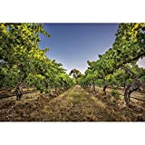 CSFOTO Vineyard Backdrop 6x4ft Spring Countryside Theme Party Background for Photography Adults Kids Photo Wallpaper