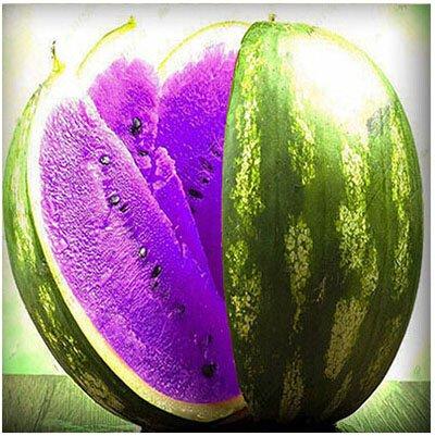 Mixtes rares Graines de pastèque chinois juteux fruits délicieux melon d'eau Plantes Bonsai pot pour jardin Décor 40 pcs/sac 5